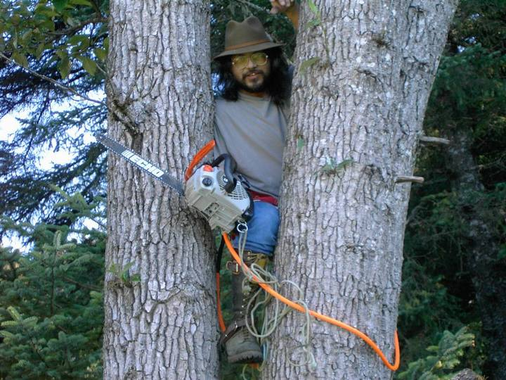 Photo of Arborist Sadi Synn in trees, with saw
